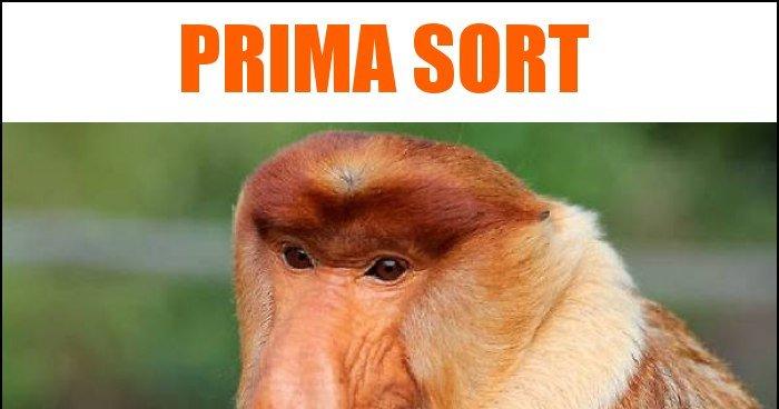 prima-sort_2018-09-09_20-03-56.jpg
