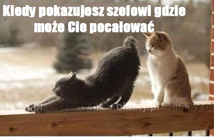 20 Memów Smieszne Obrazki Praca Najlepsze śmieszne Memy I