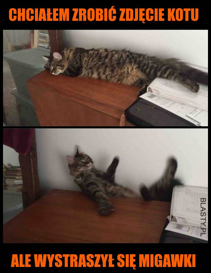 Chciałem zrobić zdjęcie kotu ale nie wiedziałem że