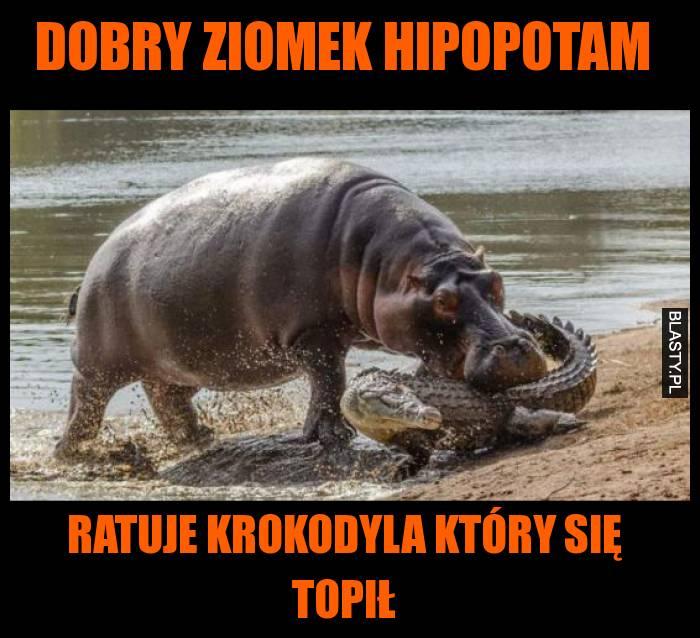 Dobry ziomek hipopotam ratuje krokodyla który się topił