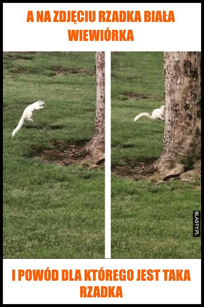 A na zdjęciu rzadka biała wiewiórka i powód dla którego jest taka rzadka