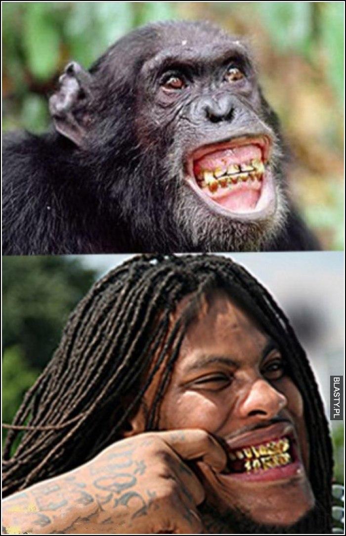 Złote zęby