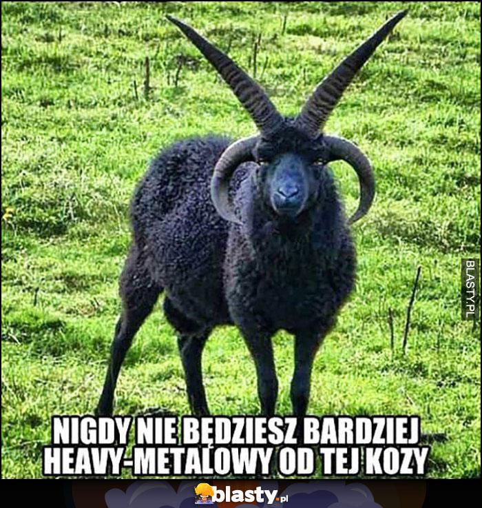Nigdy nie będziesz bardziej heavymetalowy od tej kozy