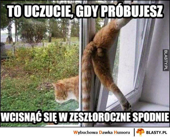 To uczucie gdy próbujesz wcisnąć się w zeszłoroczne spodnie kot przechodzi przez okno