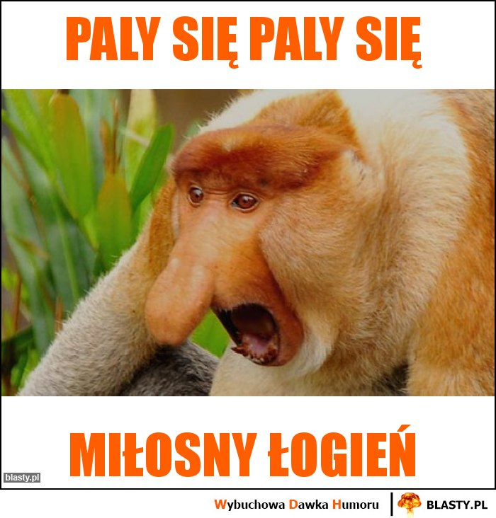 PALY SIĘ PALY SIĘ