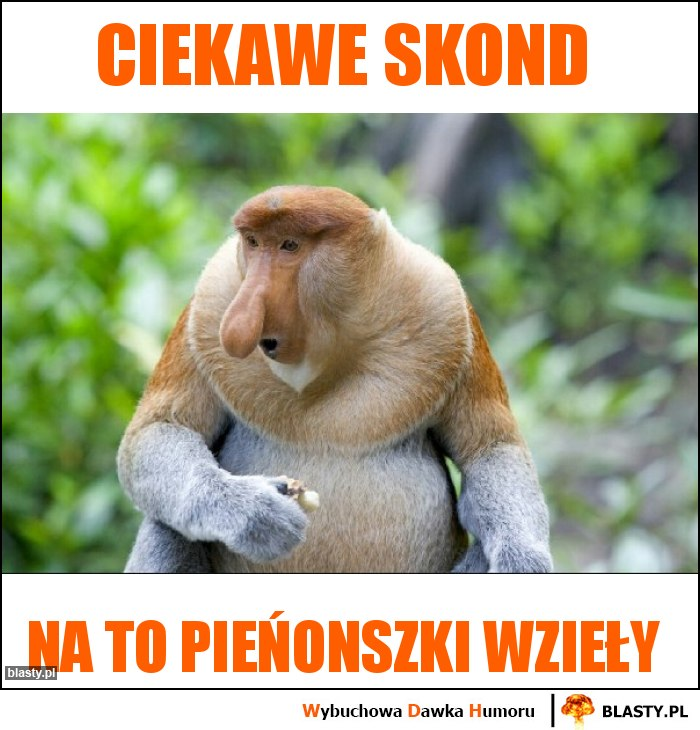 CIEKAWE SKOND