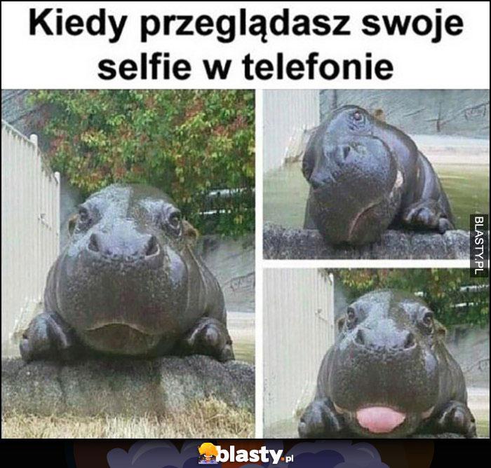 Kiedy przeglądasz swoje selfie w telefonie hipopotam
