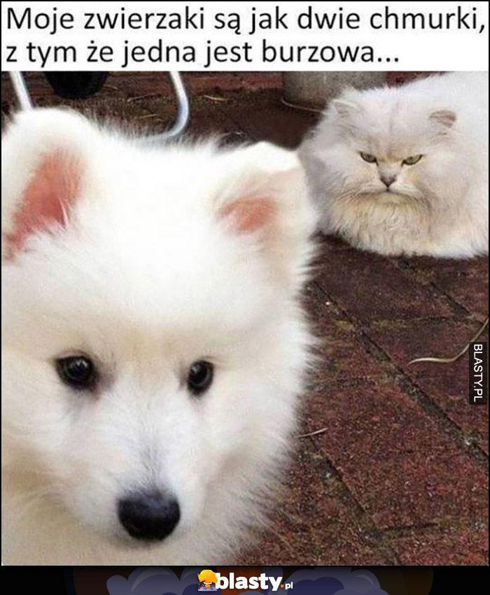 Moje zwierzaki są jak dwie chmurki, z tym że jedna jest burzowa zły kot