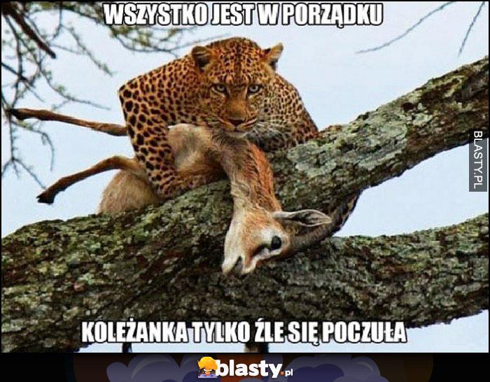 Wszystko jest w porządku, koleżanka tylko źle się poczuła tygrys gepard antylopa