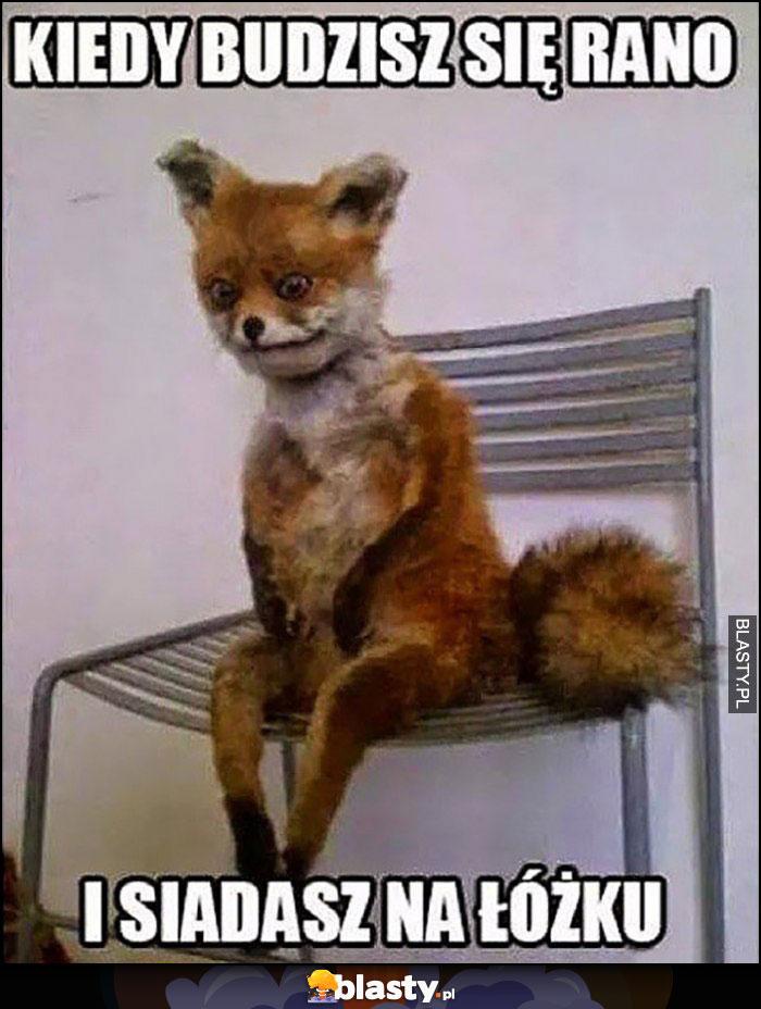 Lis kiedy budzisz się rano i siadasz na łóżku
