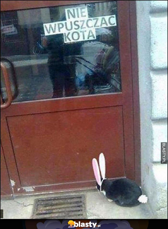 Nie wpuszczać kota napis na drzwiach, kot czeka w przebraniu królika zająca