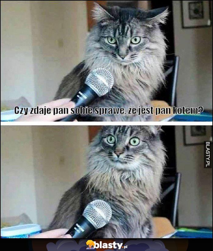 Kot czy zdaje Pan sobie sprawę, że jest Pan kotem?