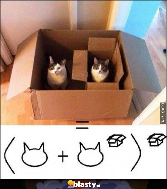 Koty w pudełkach równanie matematyczne kot do potęgi