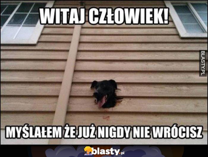 Pies przez dziurę w ścianie: witaj człowiek, myślałem, że już nigdy nie wrócisz