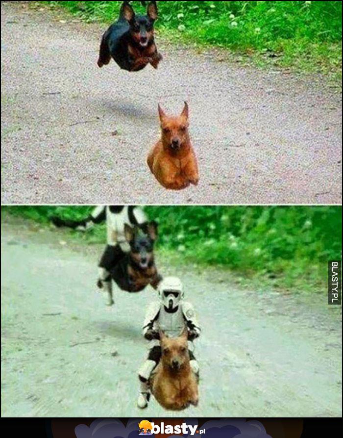 Psy biegną zdjęcie przeróbka Star Wars Gwiezdne Wojny
