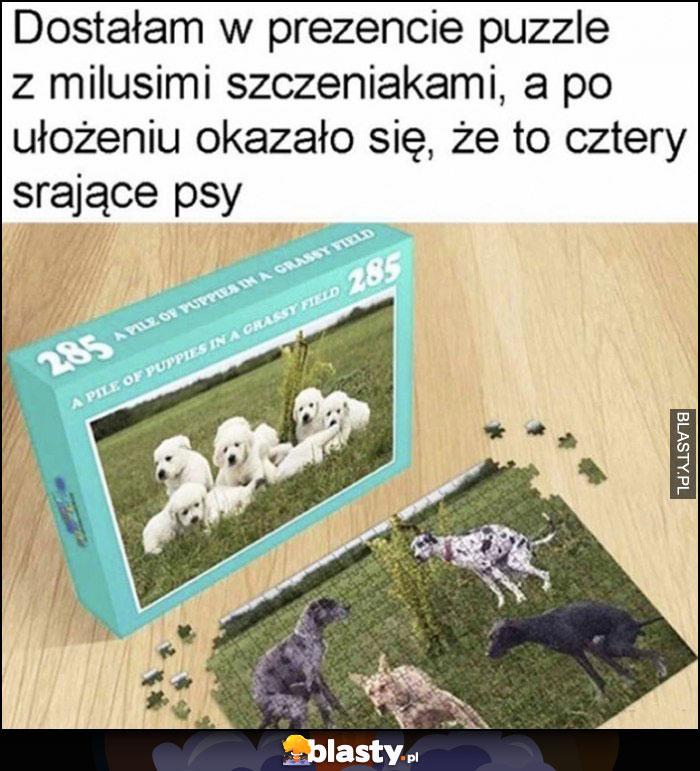 Dostałam w prezencie puzzle z milusimi szczeniakami, a po ułożeniu okazało się, że to cztery srające psy