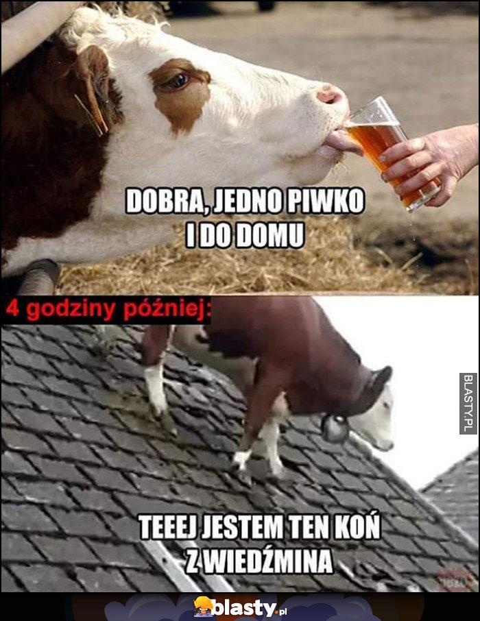Krowa dobra jedno piwko i do domu, 4 godziny później krowa na dachu, jestem ten koń z wiedźmina