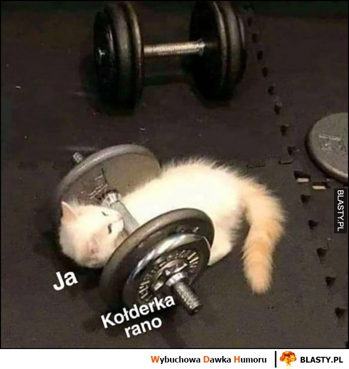 Ja, kołderka rano kot dźwiga sztangę ciężary