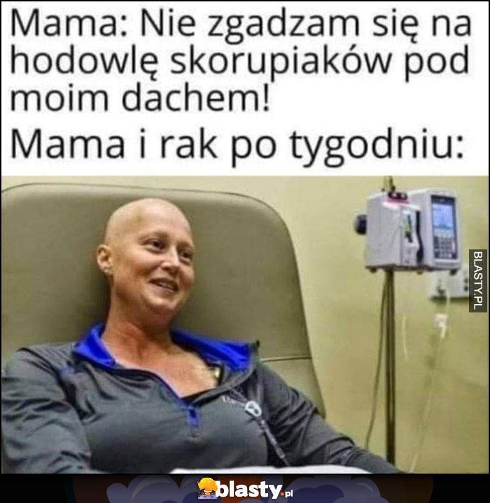 Mama: nie zgadzam się na hodowlę skorupiaków pod moim dachem, mama i rak po tygodniu dosłownie