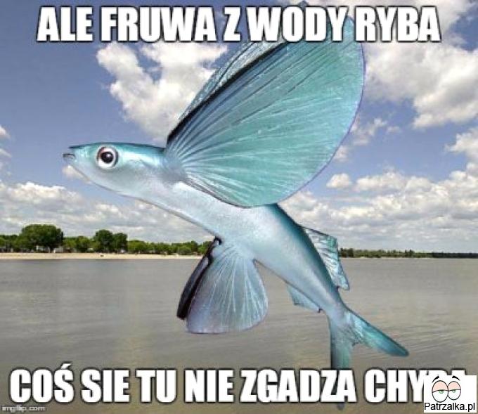 Ale fruwa z wody ryba coś się tu nie zgadza chyba