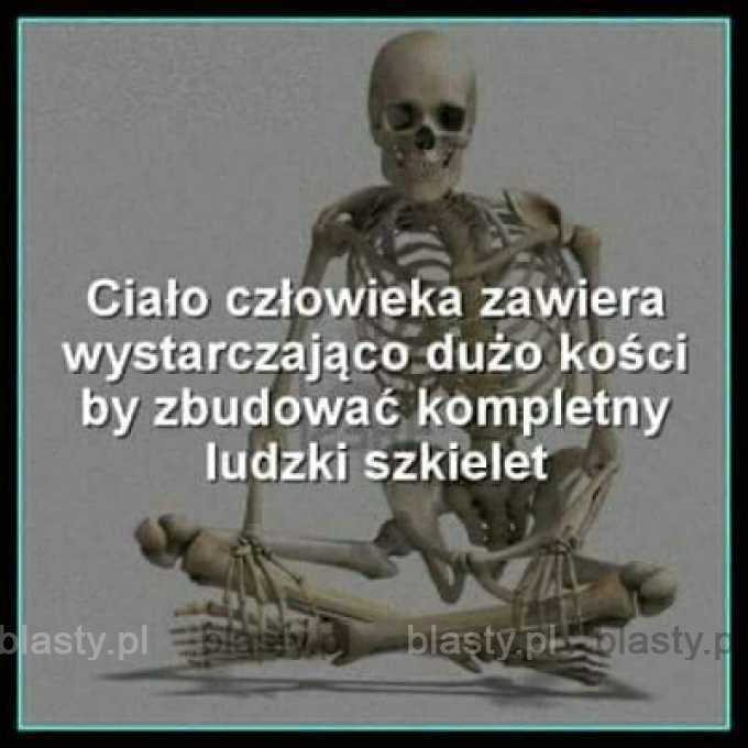 Ciało człowieka zawiera