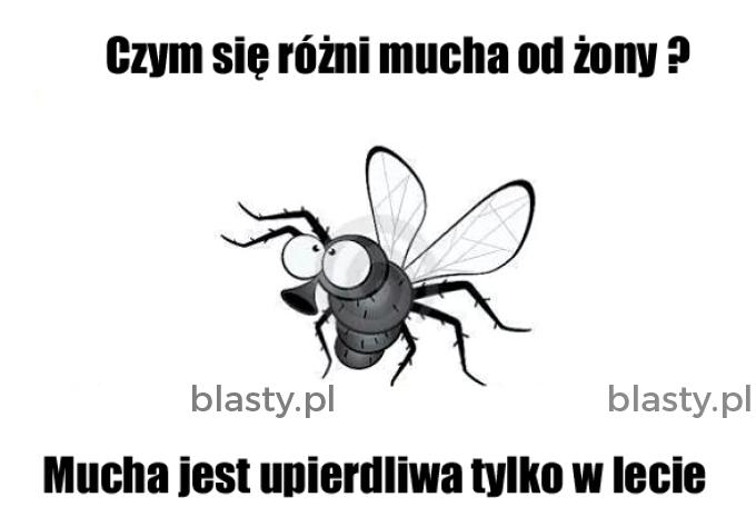 Czym się różni mucha od żony