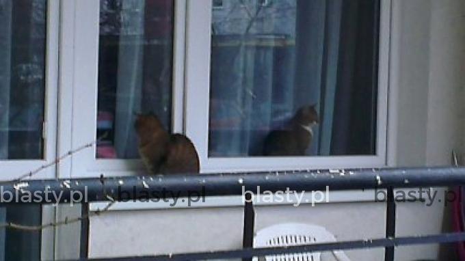 Dzień trzeci. Dalej nie wiedzą, że wpuścili nie tego kota
