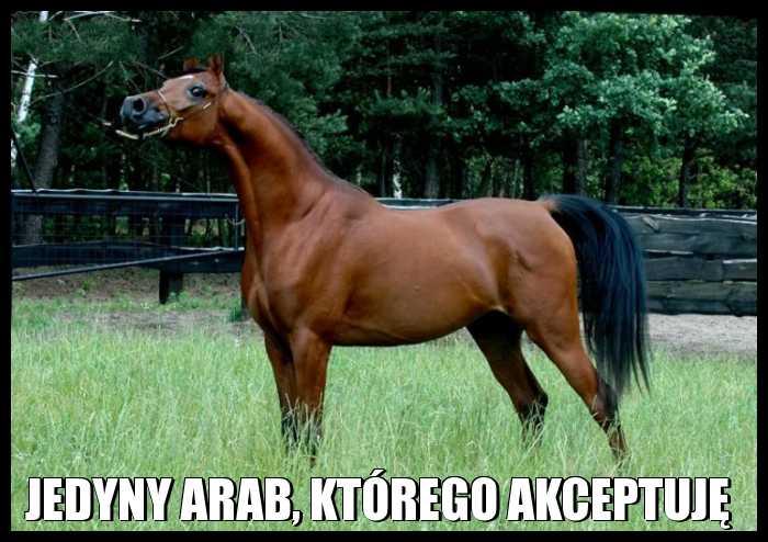 Jedyny Arab, którego akceptuję