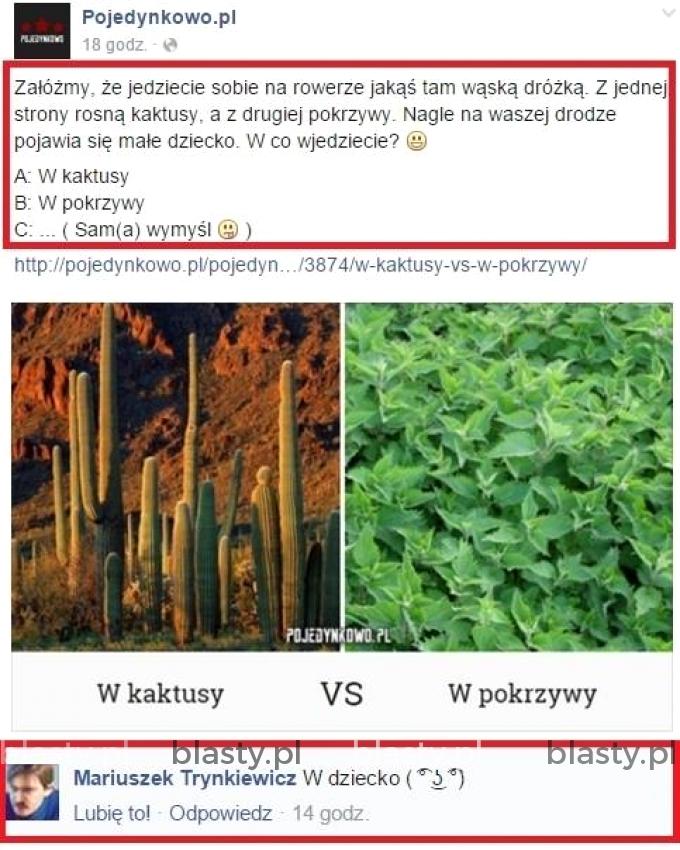 kaktusy vs pokrzywy