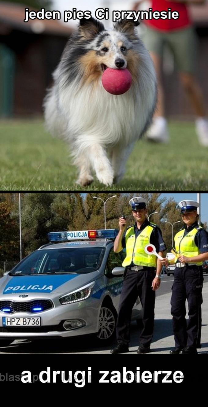 Każdy pies jest inny