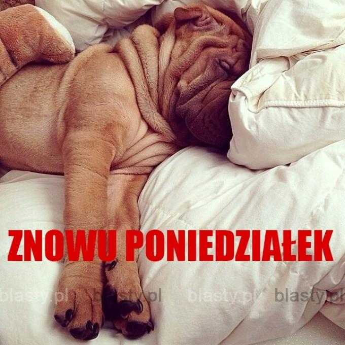 Kiedy budzisz się w poniedziałek