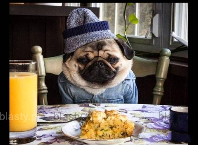 Kiedy jesteś hipsterem, ale rozładował Ci się telefon i nie możesz zrobić zdjęcia swojego jedzenia