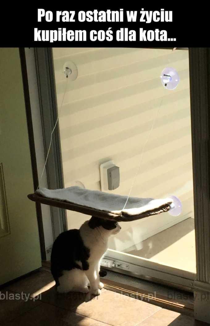 Kiedy kot ma gdzieś Twoje starania.