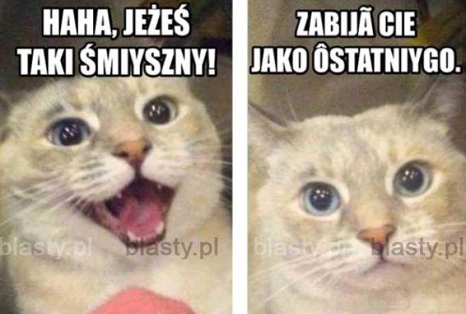 Kiedy kot ma większe poczucie humory od Ciebie
