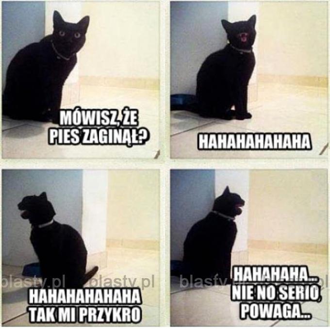 Kiedy mówisz kotu, że Ci pies zaginął.