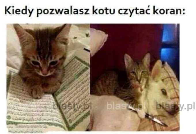 Kiedy pozwalasz kotu czytać koran