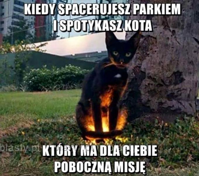 Kiedy spacerujesz parkiem i spotykasz kota
