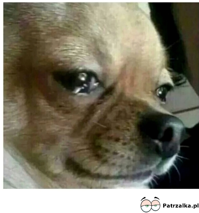 Kiedy Twój właściciel przyjdzie do domu i pachnie innym psem