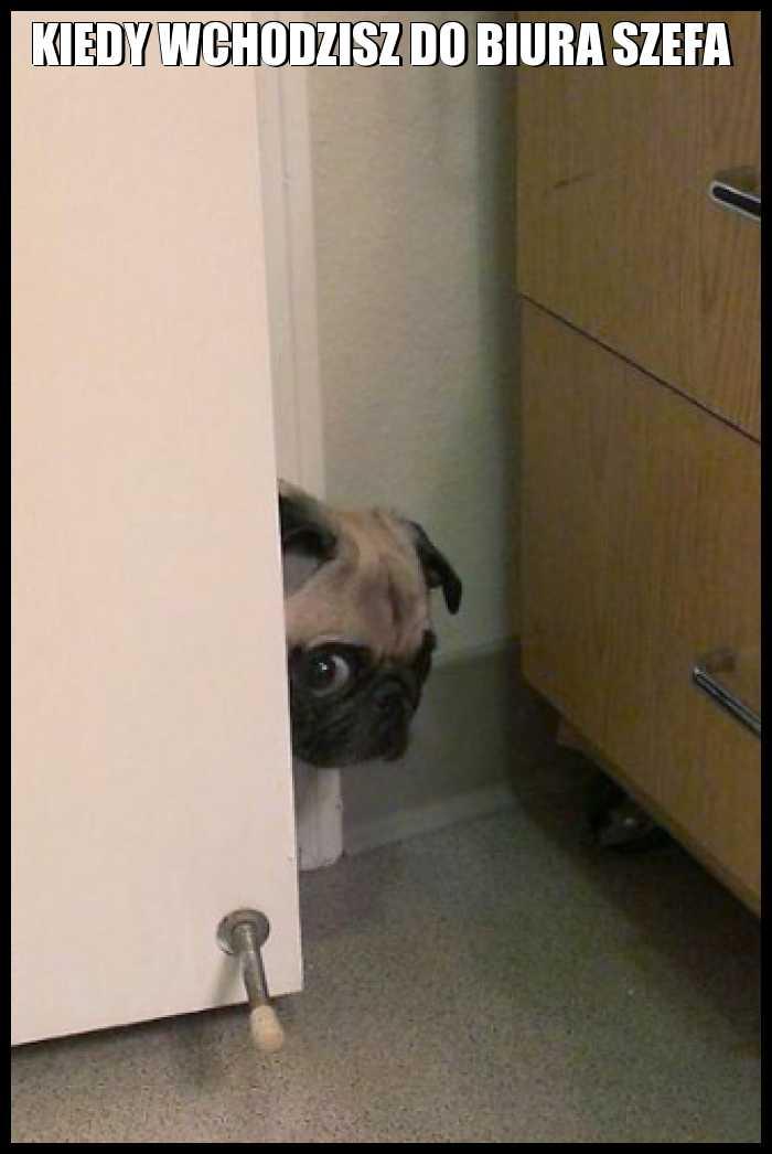 Kiedy wchodzisz do biura szefa