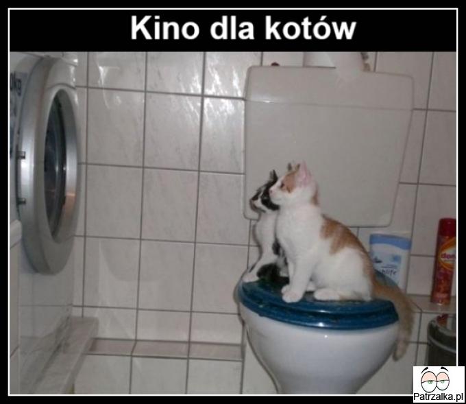 Kino dla kotów