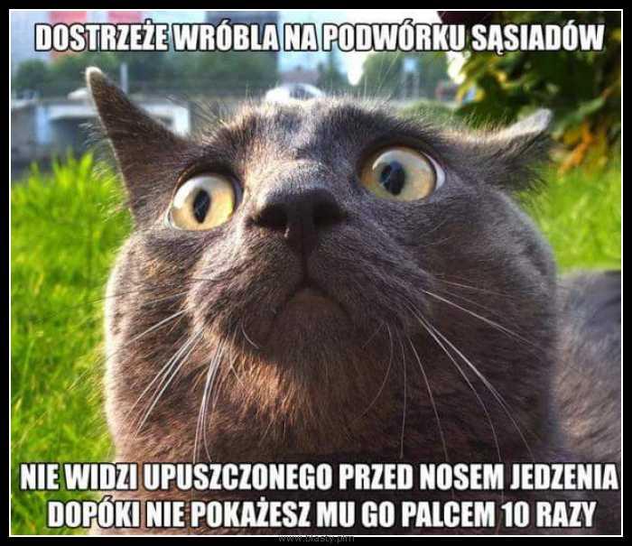 Kot mistrz spostrzegawczości