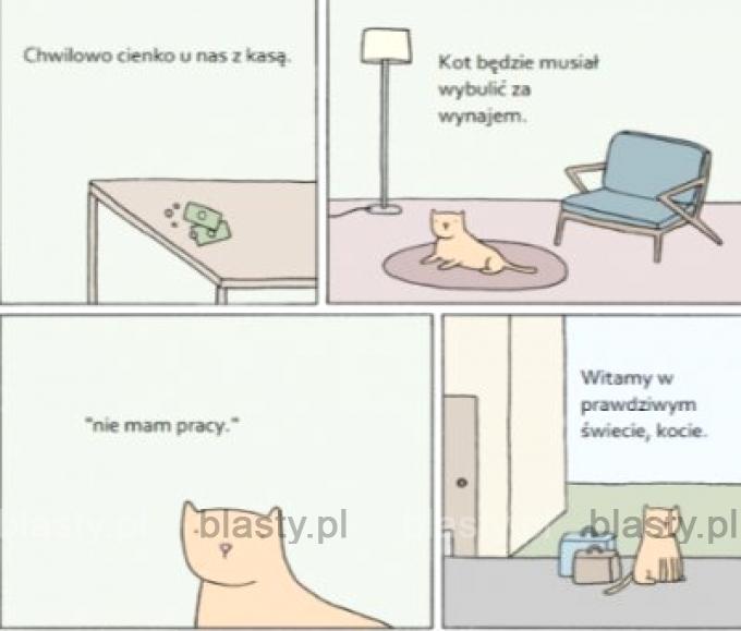 Kot nie ma łatwo