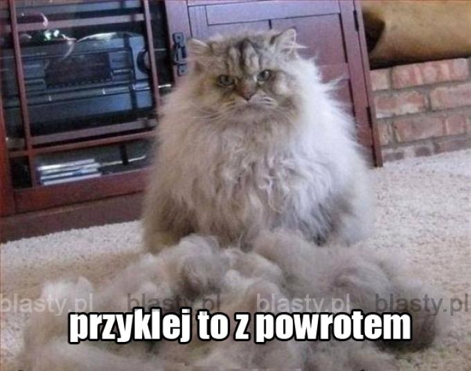 Koty tak mają