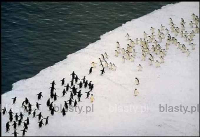 Krwawa ustawka na Antarktydzie