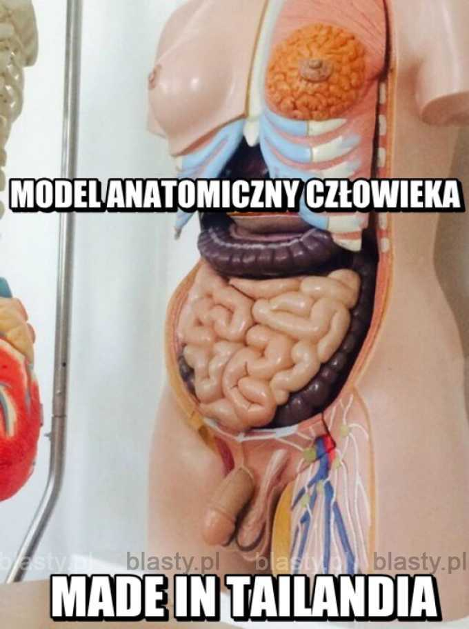Lekcja anatomii w Tajlandii.