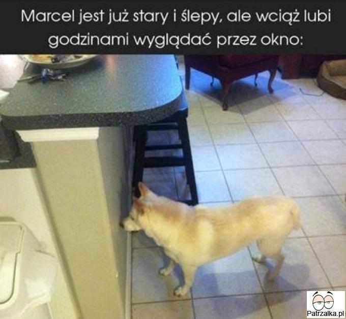Marcel jest już stary i ślepy ale wciąż lubi godzinami wyglądać przez okno