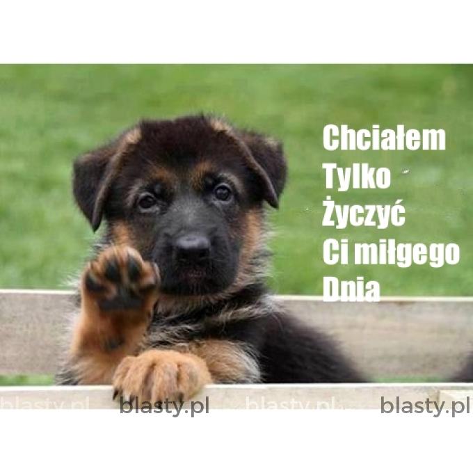 Miłego Dnia Memy Gify I śmieszne Obrazki Facebook Tapety