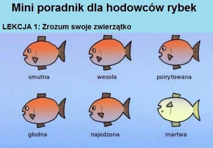 Mini poradnik dla chodowców rybek