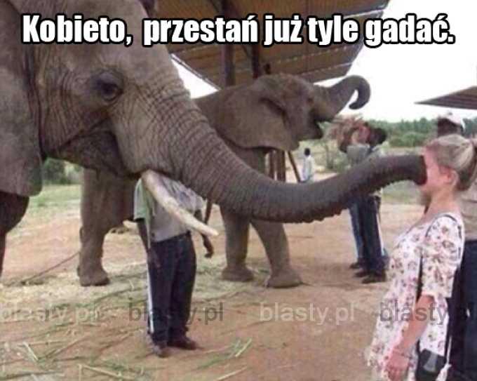 Nawet słoń stracił cierpliwość.