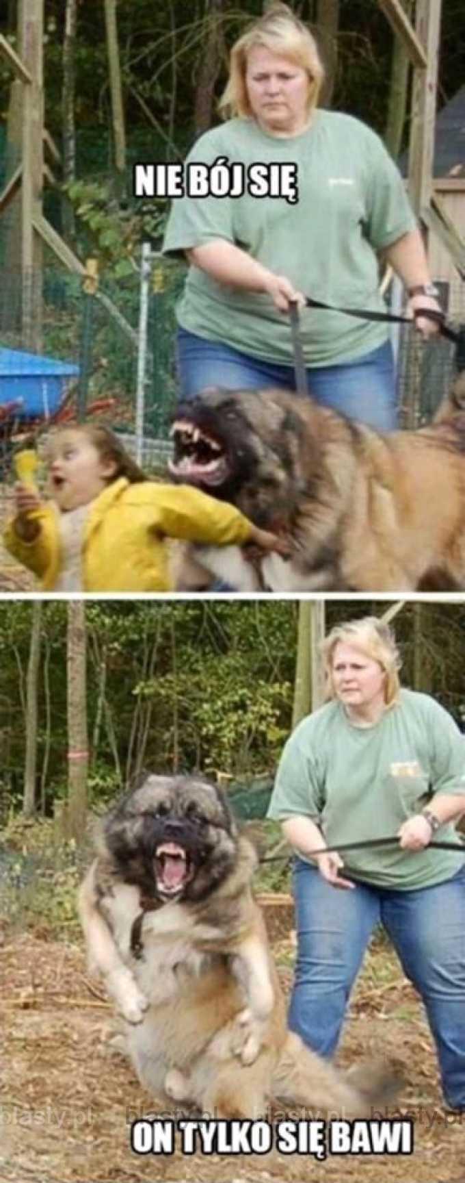 Nie bój się on tylko się bawi